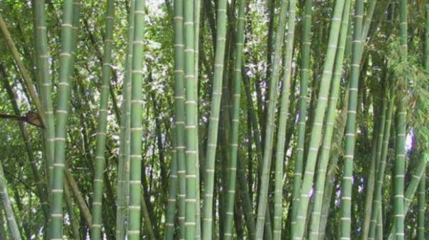 oxygen-park-with-beema-bamboo-established-at-tnau