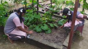 government-school-kids-cultivate-vegetables-in-school-campus
