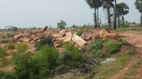villupuram-vaanur-famour-petrified-trees-are-under-threat