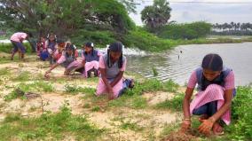 palm-seeds-planting