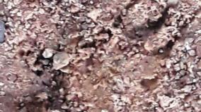 leopard-trace-in-sengalpattu
