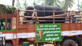 temple-elephants-are-being-taken-to-rejuvenation-camp