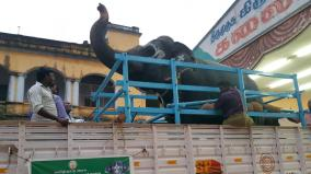 8-elephants-moved-to-thekkampatti-camp-from-nellai