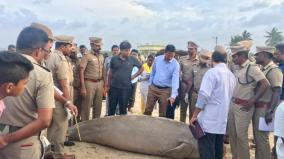 rare-species-of-dugong-dies-in-ramanathapuram
