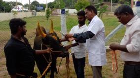 jallikattu-online-registration-of-bulls-begin