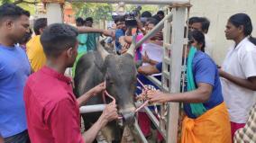 online-registration-of-bulls-begin-in-avaniyapuram