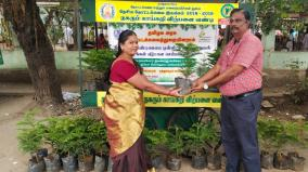 real-sapling-for-christmas-decoration-horticulture-department-introduces