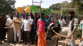 no-online-registration-of-jallikattu-bulls-owners-oppose-give-petition-to-collector