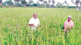 traditional-crops