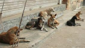 chennai-corporation-commissioner-requests-to-register-details-of-ngos-and-volunteers-who-care-street-side-dogs