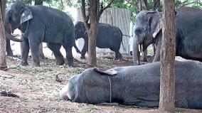 kovai-elephant-camp-lights-up