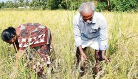 tanjore-farmer