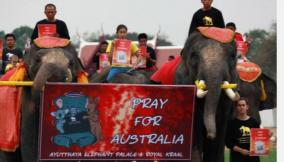 thai-elephants-march-in-silence-for-australian-bushfires