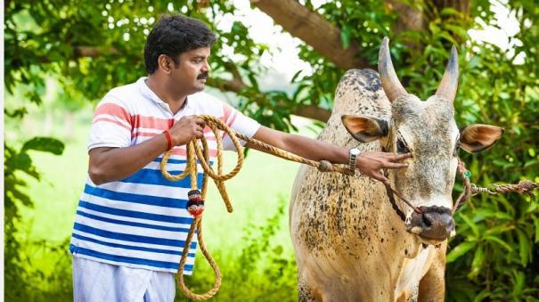 minister-vijayabhaskars-bull-play-creates-confusion