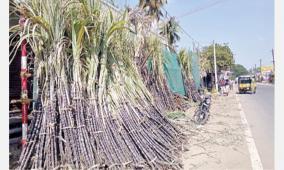 sugarcane-business