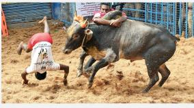 government job for jallikkattu
