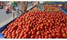 tomato-production