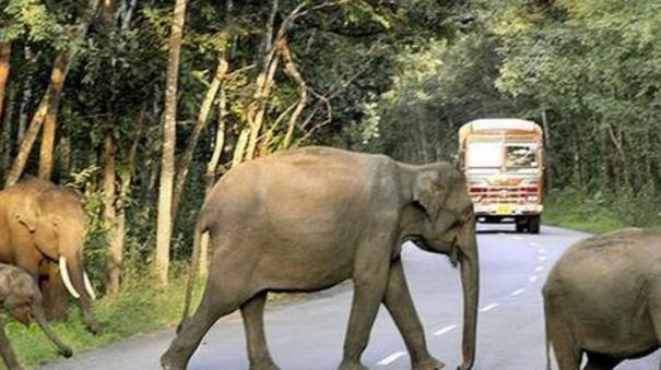 man-must-give-way-to-the-elephant-says-supreme-court
