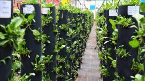 nutrition-gardens
