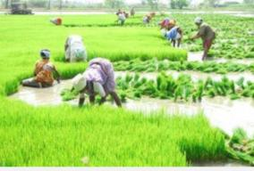 govt-committed-to-doubling-farmers-income-by-2022-fm
