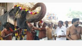 palani-temple-elephant-returns-from-camp