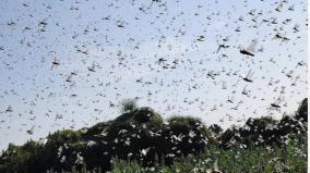 pakistan-declares-national-emergency-to-battle-locusts