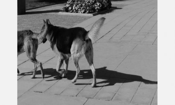 dog-masks-sale-increases-in-china-amid-corona-virus