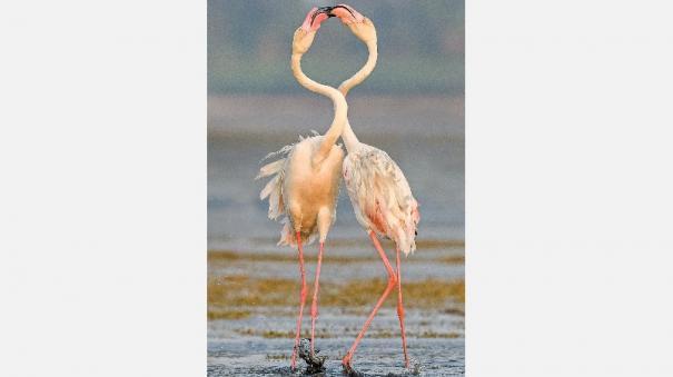 wildlife-taxonomy