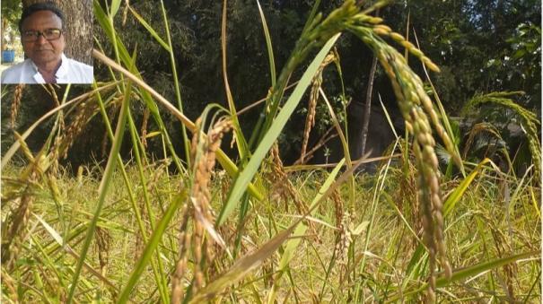 a-farmers-organic-farming-tale-from-periyakulam