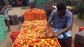 tomato-price-drop-in-ottanchathiram
