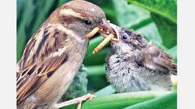 birds-may-learn-to-make-better-food-choices-by-watching-videos-of-others-eating