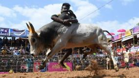 plea-seeking-permission-to-conduct-jallikattu-throughout-the-year-dismissed