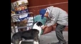 man-s-kind-gesture-for-thirsty-dog-wins-internet