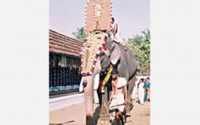 guruvayoor-temple-elephant
