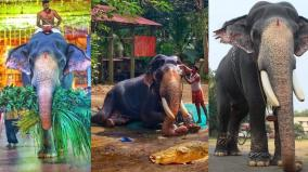 elephant-death-in-guruvayur-temple-the-biggest-elephant-in-india-is-the-tragic-end-of-the-age-of-84-years