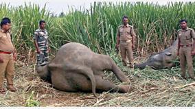 elephants-passed-away