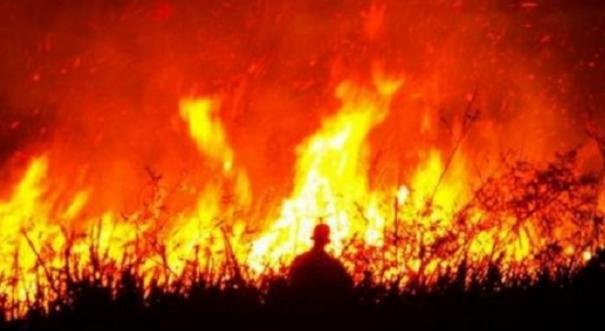 army-officer-dies-trying-to-save-his-dog-from-fire