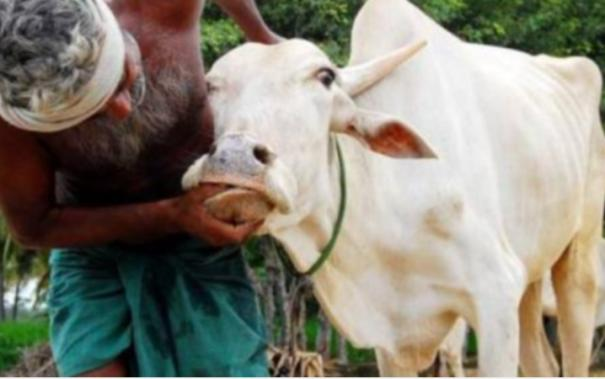 vacancies-in-veterinary-department-affects-vaccination-for-cattle