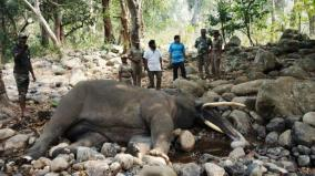 male-elephant-deaths-in-singara-forest