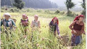 seed-satyagraha-struggles