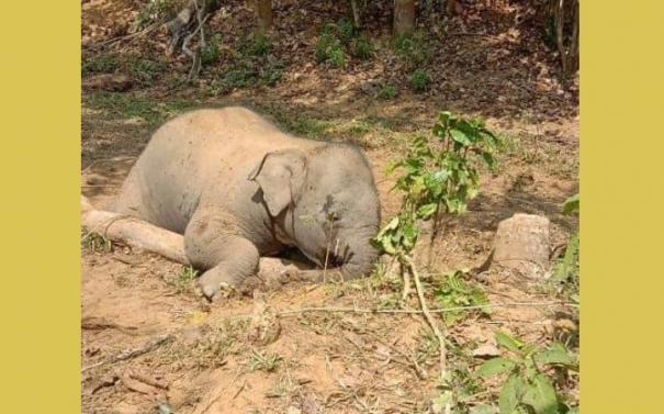 passage-fight-in-mudumalai-dead-elephants-waiting-in-the-vicinity