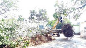 ramanathapuram-20-years-tree-uprooted-and-planted-in-amma-poonga