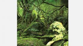 marxian-ecology