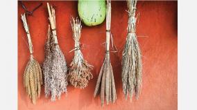 small-grain-crops