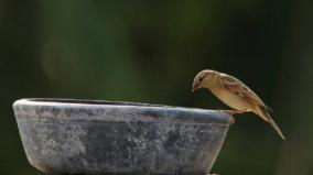 world-sparrows-day
