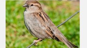 sparrow-day