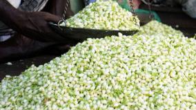 madurai-jasmine-rates-slash-down-drastically