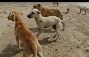 look-out-for-helpless-street-animals-and-abandoned-animals-government-orders