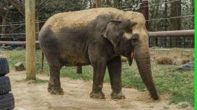 72-year-old-elephant-gifted-to-us-by-india-euthanized-at-washington-zoo