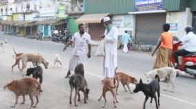 social-activist-gives-biscuits-to-stray-dogs-everyday